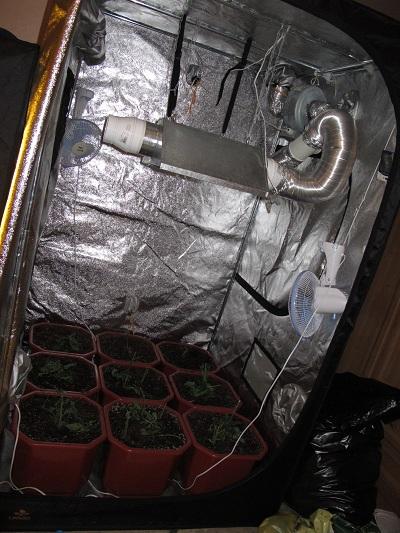 22-х летний Волжанин устроил у себя в квартире оранжерею из марихуаны