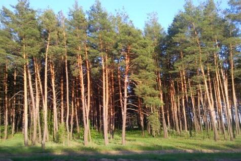 В Волгоградской области выявлены многочисленные нарушения при осуществлении противопожарных мероприятий в деятельности лесничеств