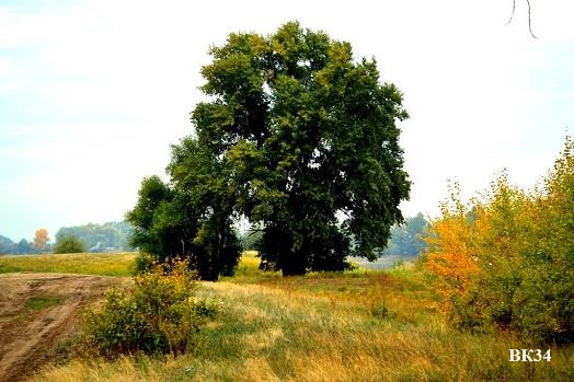 С 1 июня в Волгоградской области вновь вводится ограничение на посещение лесов