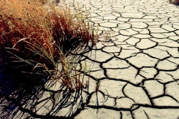 80 миллионов рублей на обводнение Волго-Ахтубинской поймы Волгоградской области