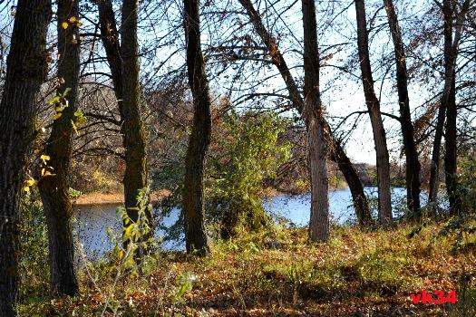 Леса Волгоградской области защищают от вредителей
