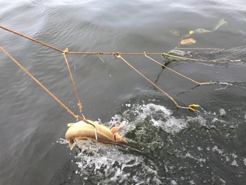 рыболовные сети в волжском