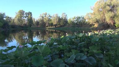 Почти все ерики и озера поймы Волгоградской области имеют достаточный уровень обводнения