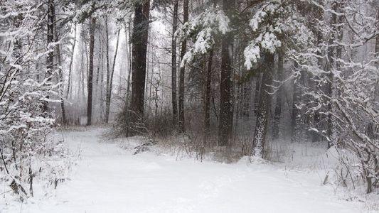 3,5 тысячи га лесов может быть включено в состав защитных «зелёных колец» в Волгоградской области