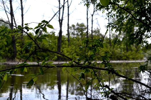 40 километров пойменных ериков расчистят в Волгоградской области