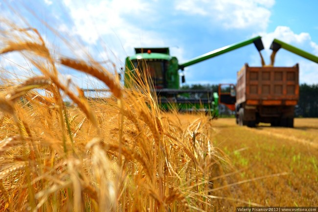 В Волгоградской области собрано полтора миллиона тонн зерна