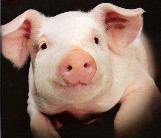 За кражу 40 миллионов бюджетных рублей еще два фигуранта по делу о строительстве свинокомплекса в Волгоградской области получили сроки